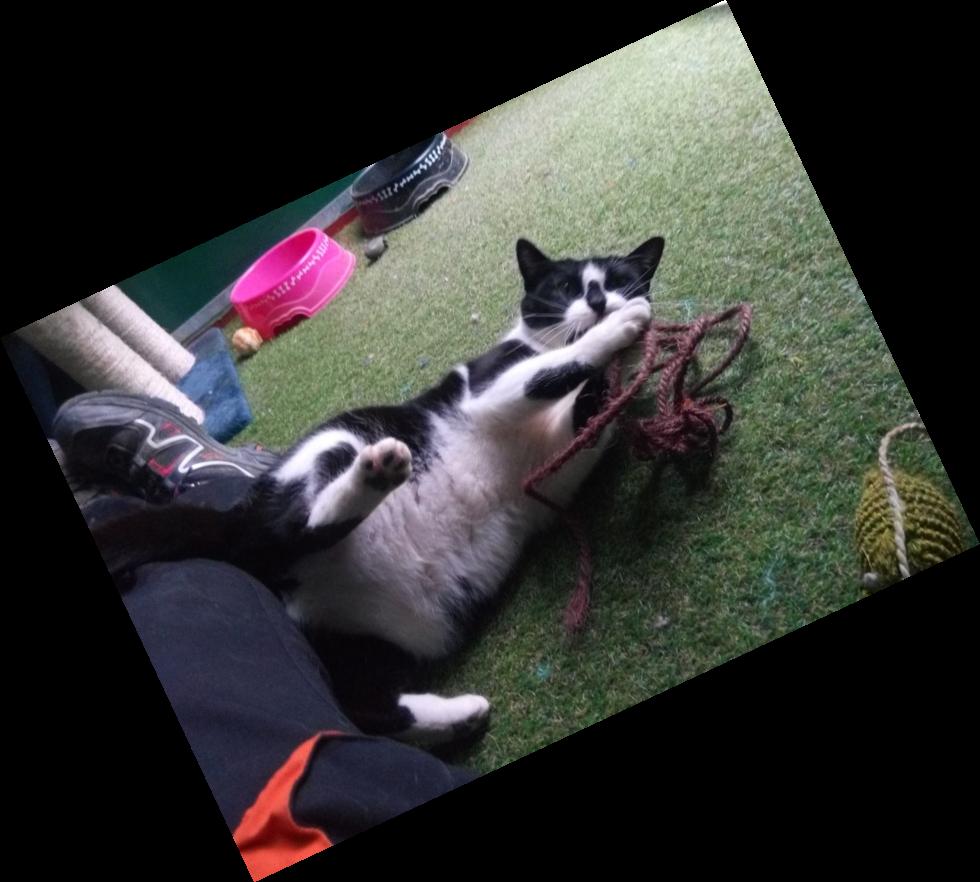 Gatos Centro Canino Quincocan